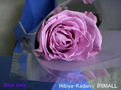 2011年 Blue Rose 32 (MAR 2011)